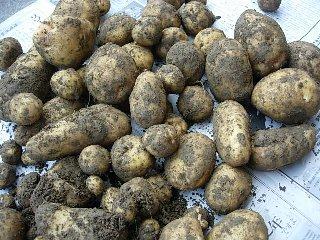 potato0705.jpg